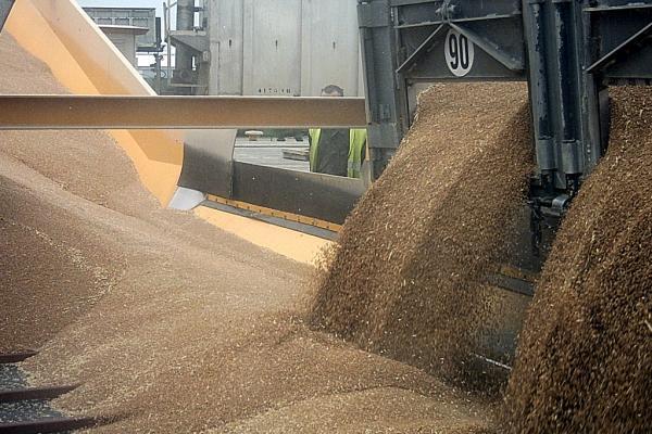 Сотрудница агрофирмы ответит за гибель трёх рабочих в яме с зерном