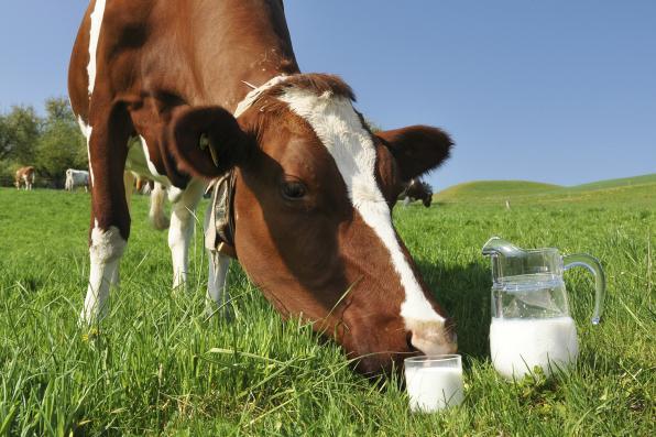 Моніторинг цін на молоко на 21 квітня