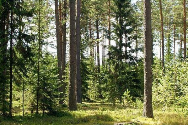 Картинки по запросу картинка Лісові землі оподатковуються земельним податком