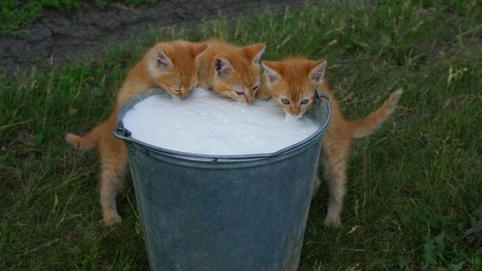 Домашнє молоко опинилося під забороною продажу — з 1 січня селяни не можуть його продавати