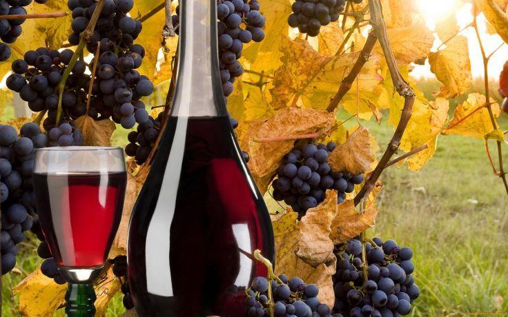 Україна має високий потенціал для виробництва високоякісних червоних вин – НААН