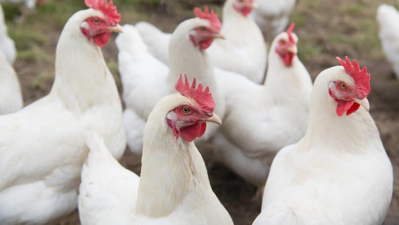 Преференції виробникам м'яса птиці та яєць склали $1,3 млрд –  Інститут агроекономіки