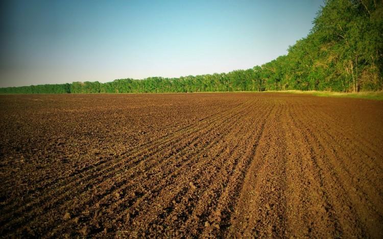 Антимонопольний комітет назвав десятку найбільших агрохолдингів за розмірами земельного банку