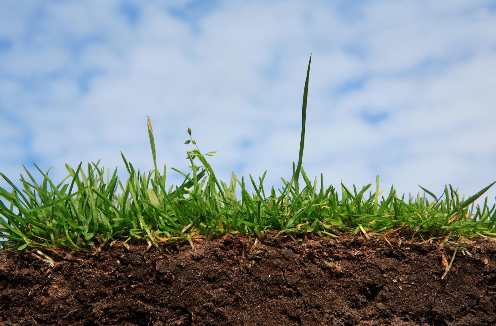 Названо 3 наслідки для агробізнесу, підписаного Порошенком закону