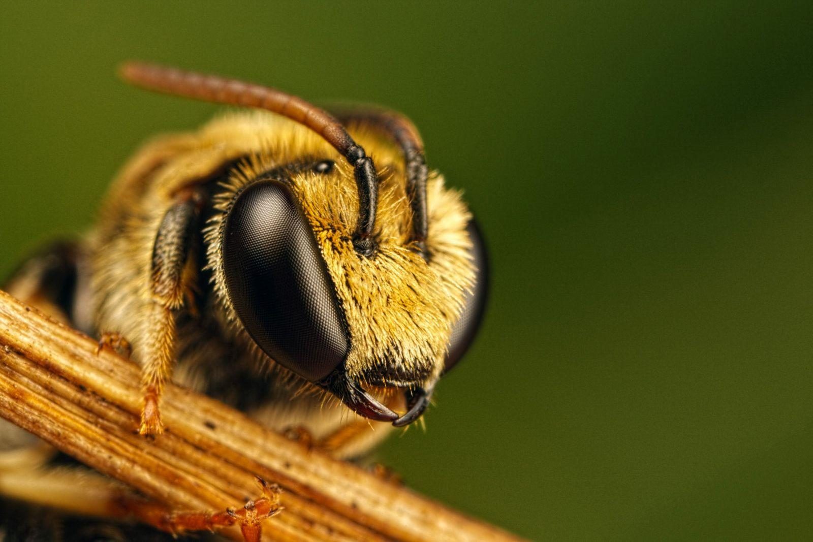 В Україні буде посилена відповідальність за отруєння бджіл
