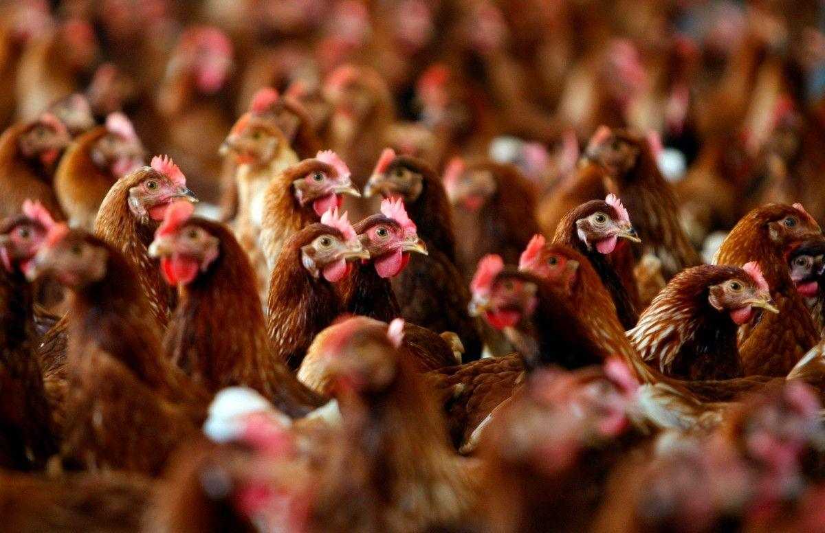Кабмін збільшив дотації найбільшим агрохолдингам на 500 млн грн