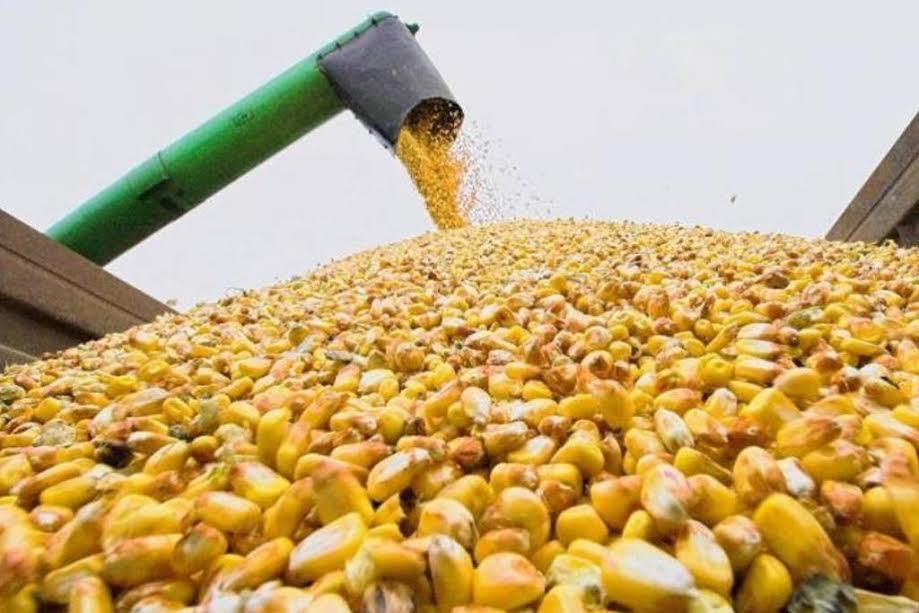 Україна – у ТОП-5 найбільших експортерів агропродукції до ЄС