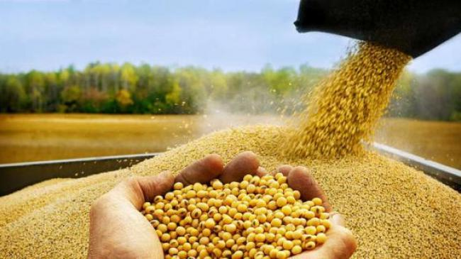 Від скасування експортного ПДВ на олійні агробізнес очікують щорічні збитки у розмірі 51-59 млрд грн.