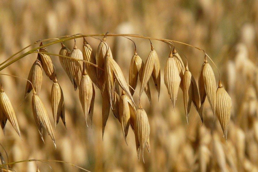 В Україні очікують падіння показників виробництва в сільському господарстві
