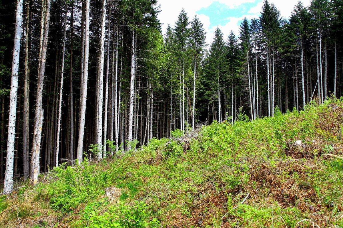 Через незаконні вирубки лісу Україна втратила 117 млн грн