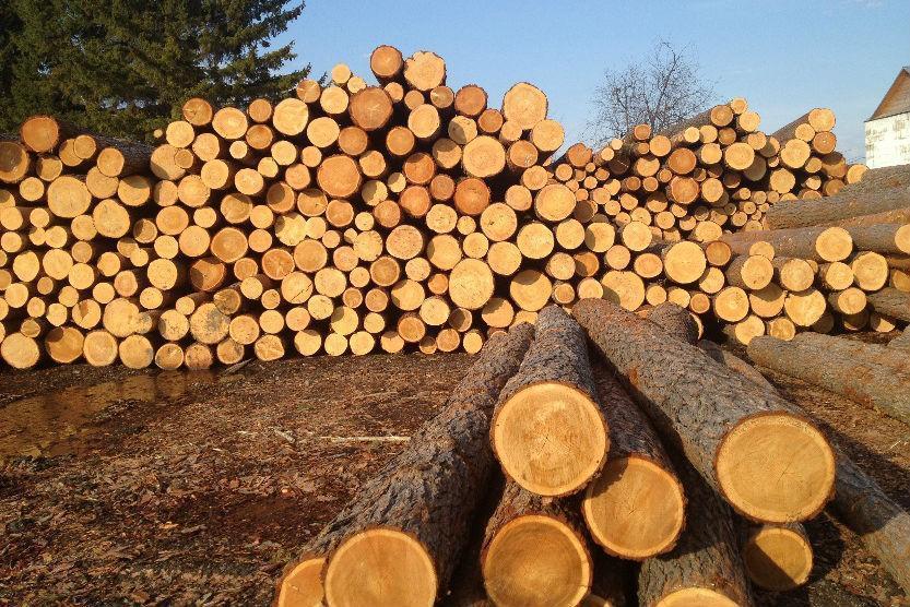 Названо умови для скасування мораторію на експорт лісу-кругляка ...