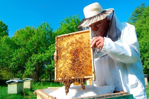 Пасічники зібрали у 5 разів менше меду, як торік