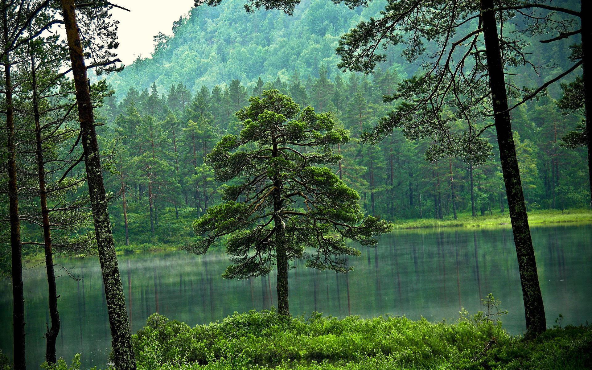 Озеро, гора, зеленый лес  № 621636 бесплатно