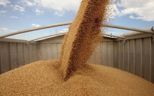 Giá xuất khẩu lúa mì Nga duy trì ổn định sau 5 tuần tăng liên tiếp