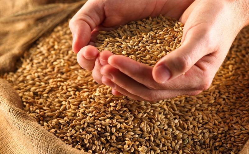 Аграрії зібрали понад 75 млн т зерна